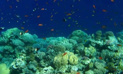 Израиль Красное море