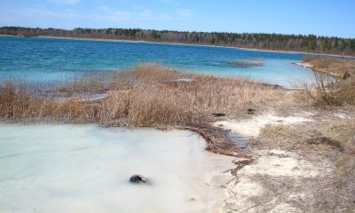 Озеро Донцо Гатчина